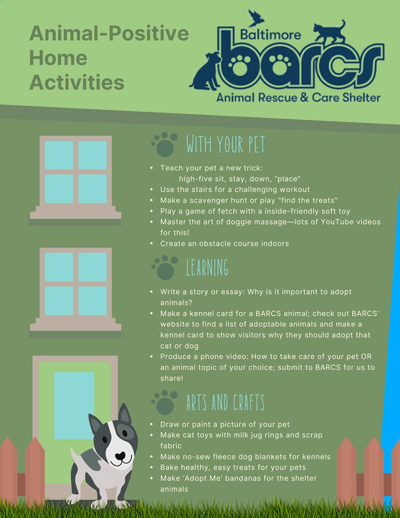 Animal-Positive Home Activities