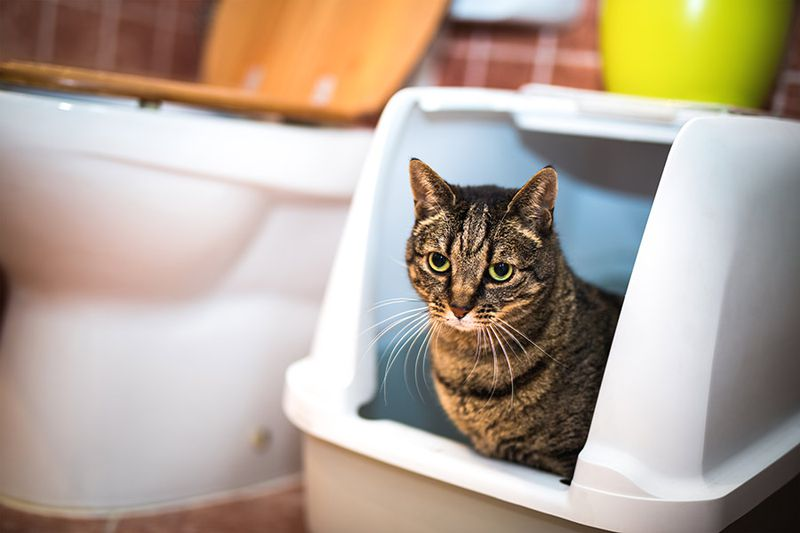 Solving Litter Box Issues